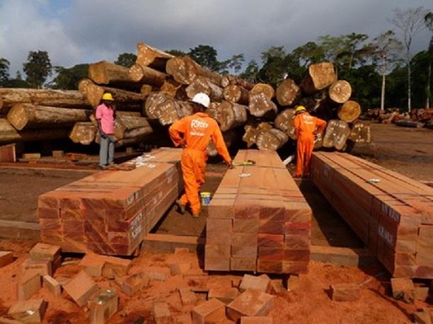 industrie du bois  277 employés au chômage, Thanr